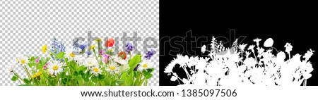 Photo of  spring grass and daisy wildflowers isolated with clipping path and alpha channel