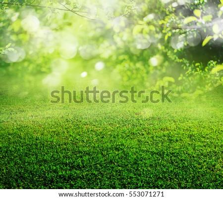 spring grass background - Shutterstock ID 553071271
