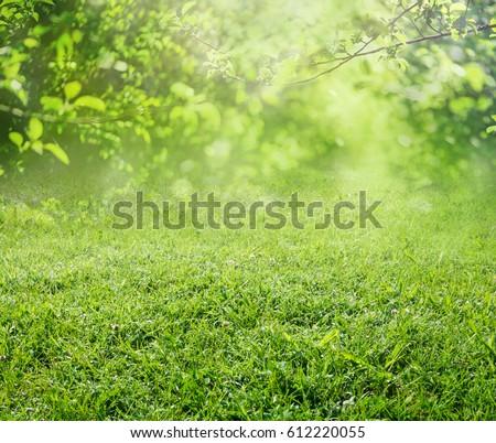spring grass background - Shutterstock ID 612220055
