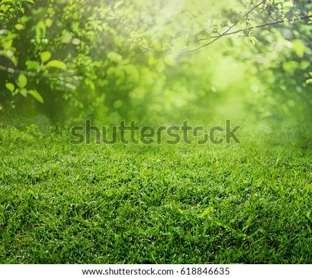 spring grass background - Shutterstock ID 618846635