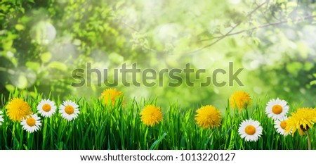 spring grass background with flowers and grass