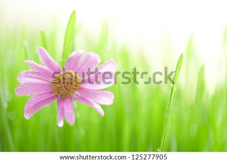 Spring grass field with a daisy