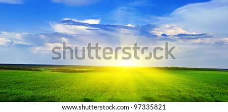 Spring grass grows on the field against the backdrop of the sunset. Spring landscape Panorama.