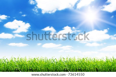 spring green field and beautiful blue sky