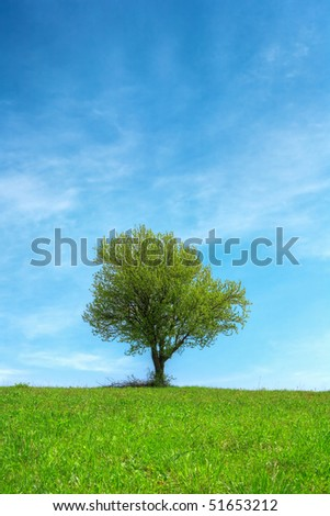 stock-photo-spring-green-grass-field-and-blue-cloudy-sky-with-lonely-oak-tree-51653212.jpg