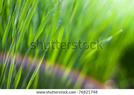 Spring green grass in the sun