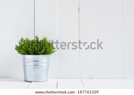 Spring green home plant in a metal pot on a background of white-painted boards. Village life, home gardening.