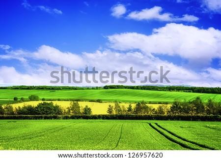 Spring green landscape - stock photo
