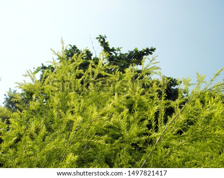 Spring grows new leaves and blue sky, background deliberately blurred #1497821417
