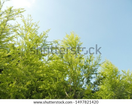 Spring grows new leaves and blue sky, background deliberately blurred #1497821420