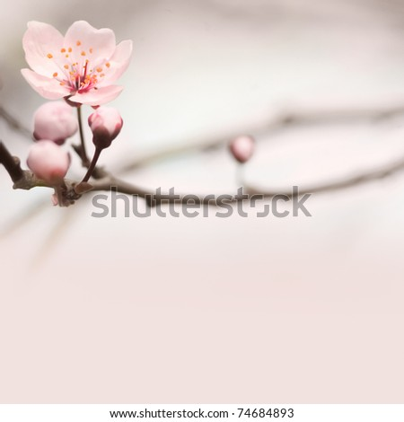 Spring header with with pink flower buds and copy space.