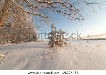 Spring high water in wood at lake. winter landscape