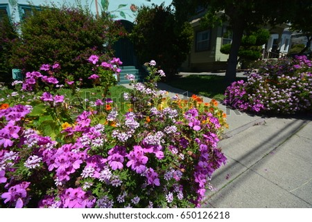 Spring Impressions from Berkeley from April 30, 2017, California USA #650126218