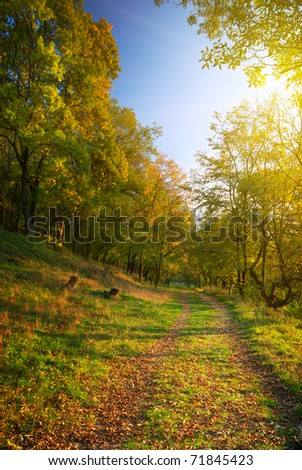 Spring in forest. Nature composition.