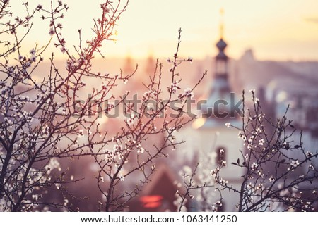 Spring in the city. Blooming trees against old town. Beautiful sunrise in Prague, Czech Republic #1063441250