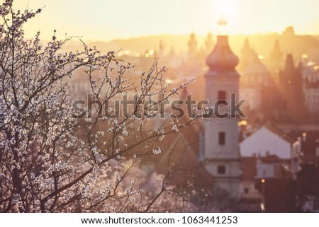 Spring in the city. Blooming trees against old town. Beautiful sunrise in Prague, Czech Republic #1063441253