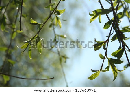 Spring in the forest or Forest background
