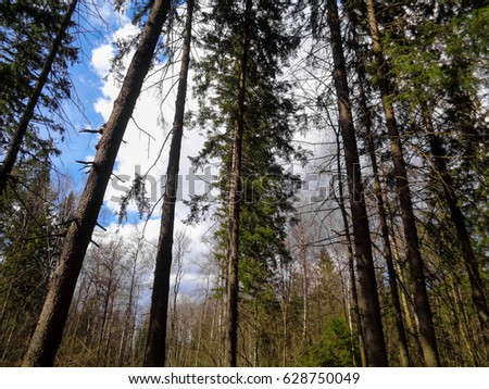 Spring in the forest. Sunny day in April. Nature of Eastern Europe - Shutterstock ID 628750049