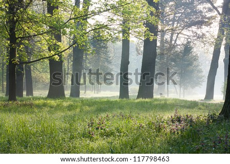 Spring in the old park. Misty Morning nature #117798463