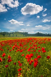 Spring in Tuscany rolling fields in Pienza Firenze Siena Italy