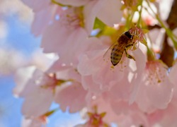 Spring is Here and the Bees are Buzzing