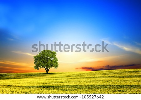 Spring landscape at sunset