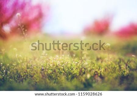 Spring landscape flowers #1159028626