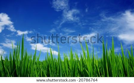 Spring landscape - green fields, the blue sky