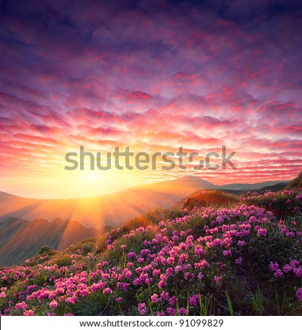 Spring landscape in mountains with Flower of a rhododendron and the sky with cloud