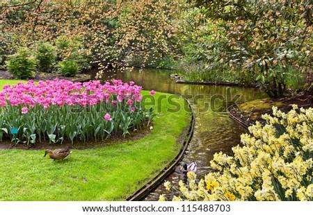 Spring landscape in park Keukenhof, Netherlands - stock photo