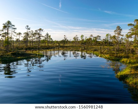 Photo of  spring landscape in the swamp.  small swamp lakes, moss and swamp pines, calm swamp water and beautiful glare
