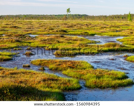 Photo of  spring landscape in the swamp.  small swamp lakes, mosses and swamp pines.  small island of swamp water and beautiful reflections
