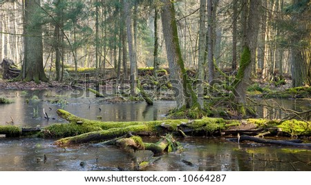 Spring landscape of old forest and water