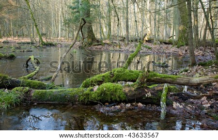 Spring landscape of old forest and water with log lying in frozen water