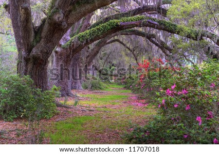 Spring landscape scene in woods of Charleston, South Carolina