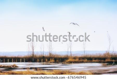 spring landscape   seagulls...