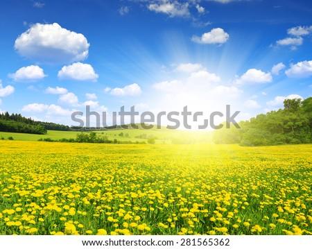 Spring landscape with dandelions on meadow - Shutterstock ID 281565362