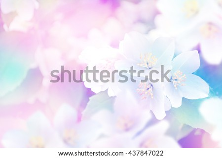 stock photo spring landscape with delicate jasmine flowers white flowers 437847022 - Каталог — Фотообои «Цветы»