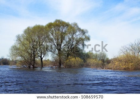 Spring landscape with flooded trees