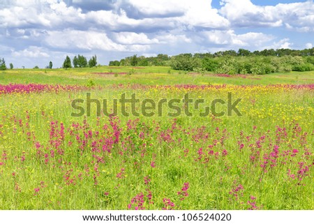 Spring landscape with flower field and  sky with clouds, Bucha, Ukraine
