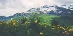 Spring landscape with flowers meadow and mountains. Panoramic view of idyllic mountain scenery in the Alps with fresh green meadows in bloom on a beautiful sunny day in springtime.