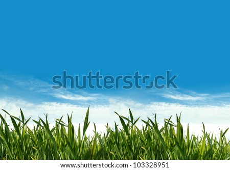 spring landscape with green grass and blue sky with clouds