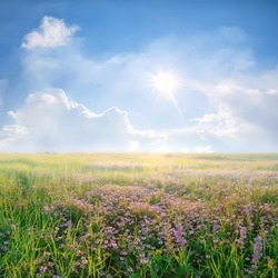 Spring landscape with purple flower meadow and beautiful clouds and sun in the sky