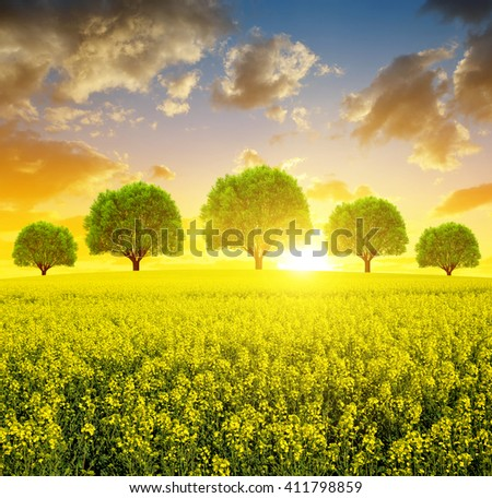 Spring landscape with rapeseed field and trees at sunset. #411798859