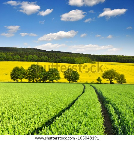 spring landscape with wheat field