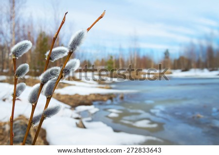 Spring landscape with willow branches