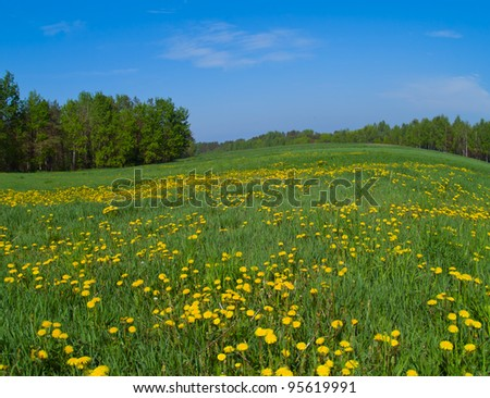 spring landscape with yellow dandelions flower