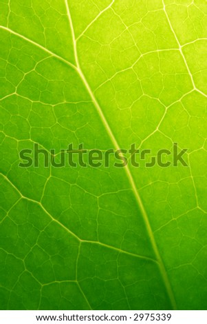 Spring Leaf Close-up
