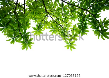 Spring leafs on white background.