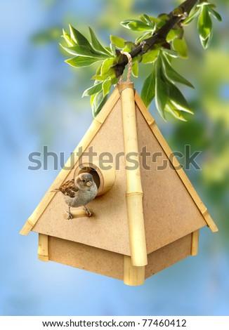 spring little bird on birdhouse